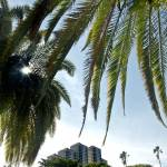 """The City of Palms"" by jkphotos"