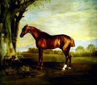 a-chestnut-racehorse