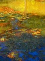 Lily Pads At Pond by Artist William Kaluta (2014)