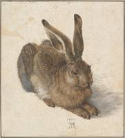 Albrecht Dürer, Young Hare, 1502, watercolor and b