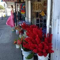 Honolulu Flower Shop Art Prints & Posters by Joel Carlson