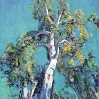 Eucalyptus Tree Balboa Park San Diego Art Prints & Posters by RD Riccoboni