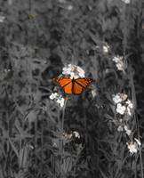 An Orange Flutter II