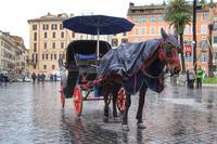 Horse and Carriage in Rome