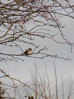 Bird on a Branch