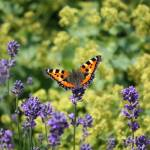 """""""Butterfly World"""" by Groecar"""