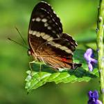 """""""Butterfly on the Edge"""" by Groecar"""