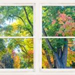 """Colorful Forest Rustic Whitewashed Window View"" by lightningman"
