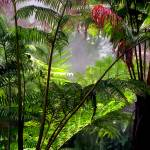 """BotanicalGardensSATX001"" by jwoodphoto"
