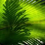 """BotanicalGardensSATX002"" by jwoodphoto"