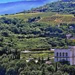 Vineyards In The Crimea