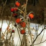Winter Road - Williamstown