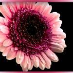 """Macro flower"" by amira"