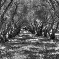 Tree Tunnel Art Prints & Posters by Susana Rigato
