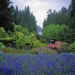 """""""Butchart Gardens in Rain 24, 2004"""" by PriscillaTurner"""