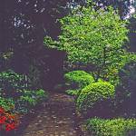 """""""Butchart Gardens in Rain 22, 2004"""" by PriscillaTurner"""
