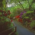 """""""Butchart Gardens in Rain 4, 2004"""" by PriscillaTurner"""