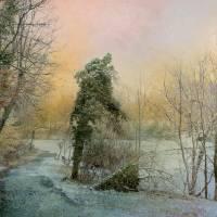 Winter Path Art Prints & Posters by John Rivera