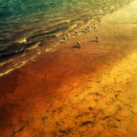 Seagulls at Sunset Art Prints & Posters by RC deWinter
