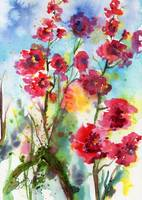 Rose Mallow Pink Lavatera Watercolor