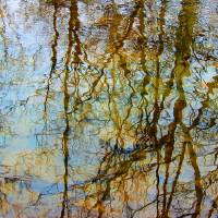 Winter Tree Reflections Art Prints & Posters by Karen Adams