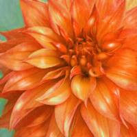 orange dahlia Art Prints & Posters by Jane Schnetlage