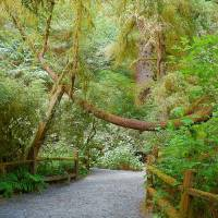 Trails Of The Redwoods Art Prints & Posters by Photography Moments