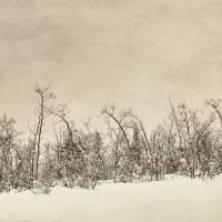 Patience Art Prints & Posters by Priska Wettstein