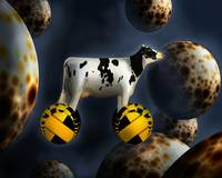 The Cow Drives Over The Moons