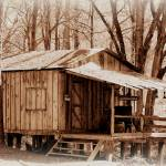 """Big Cypress Cabin"" by bettynorthcutt"