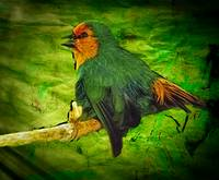 Seagreen Parrot Finch_2791