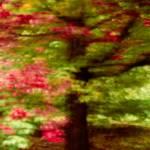 """Autumn Impressions 3"" by singularscenes"
