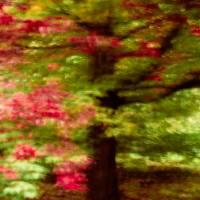 Autumn Impressions 3 Art Prints & Posters by Venetta Archer