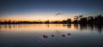 Gatton Water Duck Sunset