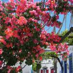 """Bougainvillea In Nisyros"" by malcolmsnook"