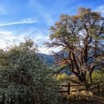 """""Song Of A Desert Morning"""" by GlennMcCarthyArtPhoto"