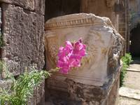 Wild Flower In An Ancient Church