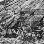 """Wagon on wood in black and white"" by memoriesoflove"
