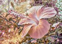 Fantasy Colors Hibiscus Flower Digital Art