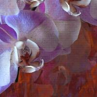 Orchidelia 5 Art Prints & Posters by Lynda Lehmann