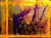 Abstract golden collage 2