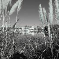 Cat Tails Art Prints & Posters by Sylvia Claiborne