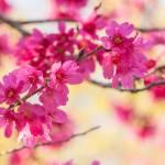 """""""Spring Magic"""" by julieandel"""