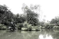 Infra-red digital, Botanic Garden Singapore