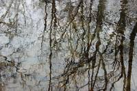 Reflections of Winter 2015