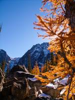 Larch and rock, Enchatments, WA