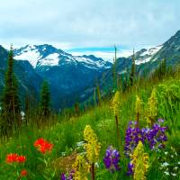 Summer on Easy Pass North Cascades, WA Art Prints & Posters by Dennis Golden