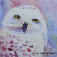 snowy owl II Art Prints & Posters by Lene Daugaard