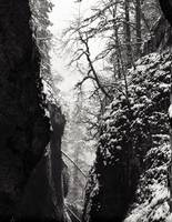Oneonta Gorge in Snow