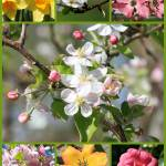 """Spring Fling Collage"" by Groecar"